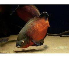 Aquarium fishes at wholesale price.