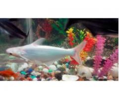Sharks fish for sale low price