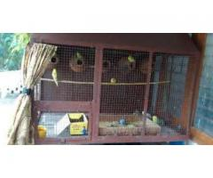 Love birds cage for sale urgent